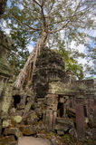 Angkor Ta Prohm in Cambodia Royalty Free Stock Photography