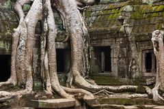 Angkor Ta Prohm temple Royalty Free Stock Image