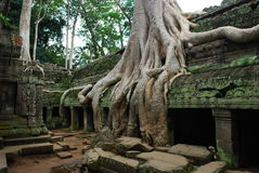 Angkor Tempel Stockfotografie