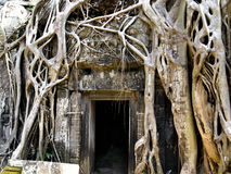Angkor tempel Arkivfoton