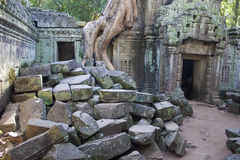 Angkor temple Ta Phrom Stock Photo