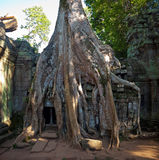 Angkor temple Ta Phrom Stock Photography