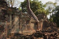 Angkor. Temple Ta Prohm. Fragment. Cambodia. Stock Photo