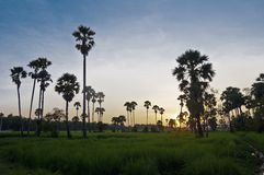 Angkor Temples Stock Photos