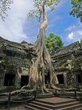 Angkor - Tha Prohm Tempel lizenzfreie stockbilder