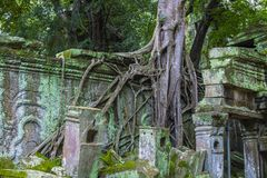 Angkor Thom Cambodia. SIEM REAP , CAMBODIA - OCT 15 :  The Ta Prohm temple in Angkor Thom, Siem Reap Cambodia on October 15 2017 , Angkor Thom was the last and Stock Photography