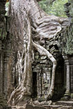 Angkor Thom overgrown Stock Photo