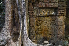 Angkor Thom overgrown wall Royalty Free Stock Images