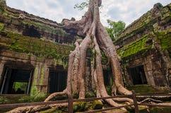 Angkor Wat - ένας γιγαντιαίος ινδός ναός σύνθετος στην Καμπότζη Στοκ εικόνα με δικαίωμα ελεύθερης χρήσης