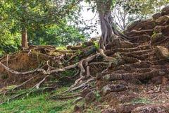 Angkor Wat, Καμπότζη - 6 Δεκεμβρίου 2016: Στοές και τουρίστες Στοκ εικόνες με δικαίωμα ελεύθερης χρήσης