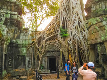 Angkor Wat, Καμπότζη - 17 Φεβρουαρίου 2011: Κλασσική εικόνα του ναού TA Prohm, Angkor, Καμπότζη Στοκ φωτογραφίες με δικαίωμα ελεύθερης χρήσης