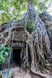 Angkor wat Καμπότζη TA prohm Στοκ Εικόνα