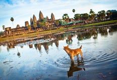 Angkor Wat με το σκυλί Στοκ φωτογραφία με δικαίωμα ελεύθερης χρήσης