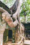 Внутри древних храмов Angkor Wat Камбоджи стоковая фотография