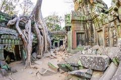 Angkor Wat 10 Arkivfoto