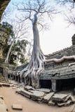 Angkor wat 13 Στοκ Εικόνες