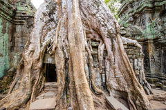 Angkor Wat 40 Stockfotografie