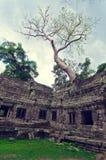 Angkor Wat Stock Photo