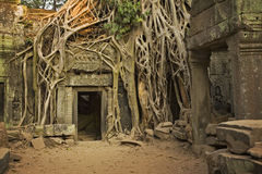 Free Angkor Wat Royalty Free Stock Photo - 8580875