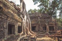 Angkor Wat Stockbild
