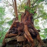 Angkor Wat Стоковые Изображения RF