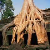 Angkor Wat Стоковые Фотографии RF