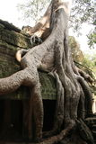 Angkor Wat Cambodia Imagem de Stock Royalty Free