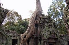 Angkor wat Cambodia. The ruins at Angkor Wat - Tree grown around a temple Royalty Free Stock Photo