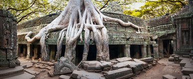 Angkor Wat Cambodia. Ta Prohm Khmer ancient Buddhist temple Royalty Free Stock Photo