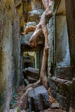 Angkor Wat Cambodia. Ta Prohm Khmer ancient Buddhist temple. Stock Photo
