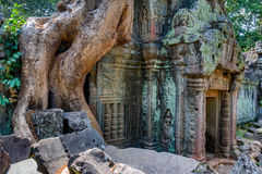 Angkor Wat Cambodia. Ta Prohm Khmer ancient Buddhist temple. Royalty Free Stock Image