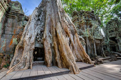 Angkor Wat Cambodia. Ta Prohm Khmer ancient Buddhist temple. Stock Photography