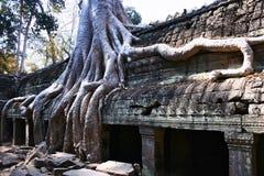 Angkor Wat - de tempel van Ta Prohm Stock Afbeeldingen