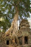 Angkor Wat - de Tempel van Ta Prohm - Kambodja Stock Afbeeldingen