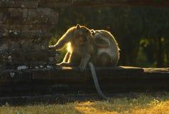 Angkor Wat Fallhammer Lizenzfreie Stockbilder
