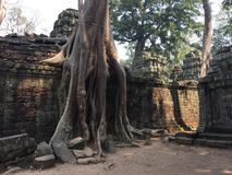 Free Angkor Wat In Siem Reap, Cambodia. Ancient Ruins Of Khmer Stone Temple Overgrown With The Roots And Giant Strangler Fig Trees Stock Image - 110538051