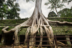 Angkor Wat Kambodja Stock Afbeelding