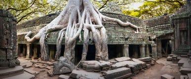 Angkor Wat Kambodja De Khmer oude Boeddhistische tempel van Ta Prohm Royalty-vrije Stock Foto
