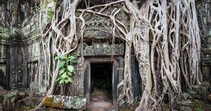 Angkor Wat Kambodja De Khmer oude Boeddhistische tempel van Ta Prom Stock Foto's