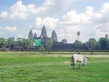 Angkor Wat in Kambodja is het grootste godsdienstige monument in de wereld en een Werelderfenis, Naad oogst Stad, Kambodja in 201 stock afbeelding