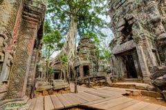 Angkor Wat Kambodscha Alter buddhistischer Tempel Khmer Ta Prohm lizenzfreies stockbild