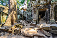 Angkor wat 28. A large Jungle tree and its roots next to the carvings in the temple at Ta Prohm in Angkor Wat (Siem Reap, Cambodia) landscape Royalty Free Stock Photos