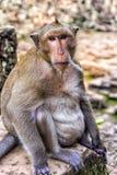 Angkor Wat monkey Stock Photo