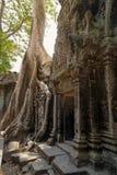 Angkor Wat Ruinen im Dschungel lizenzfreies stockbild