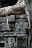 Roots growing through wall at Ta Prohm temple, Angkor Wat Royalty Free Stock Photos