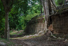 Tree growing on a wall at Ta Prohm temple, Angkor Wat Stock Photography