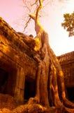 Angkor wat siem oogst stock foto's