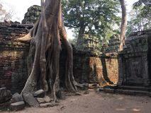 Angkor Wat in Siem Reap, Cambodia. Ancient ruins of Khmer stone temple overgrown with the roots and giant strangler fig trees. In jungle forest. Place of Stock Photos