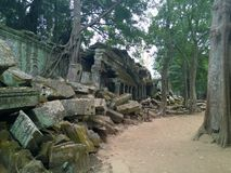 Angkor Wat in Siem Reap, Cambodia. Ancient ruins of Khmer stone temple overgrown with the roots and giant strangler fig trees. In jungle forest. Place of Stock Photo
