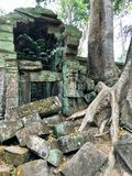 Angkor Wat in Siem Reap, Cambodia. Ancient ruins of Khmer stone temple overgrown with the roots and giant strangler fig trees. In jungle forest. Place of Royalty Free Stock Images